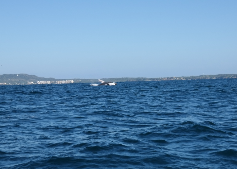 Whale Watching PVR _landofhev