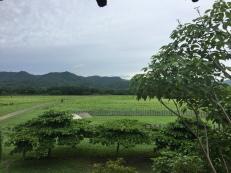 Through the Farm